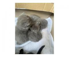 Kittens/kotki - Grafika 1/5