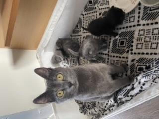Kittens/kotki - 3/5
