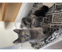 Kittens/kotki - Grafika 3/5