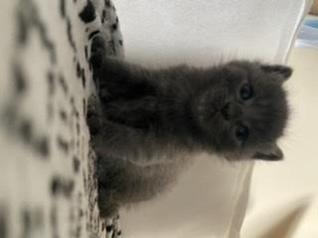 Kittens/kotki - 4/5