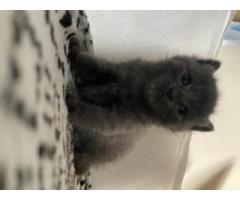 Kittens/kotki - Grafika 4/5