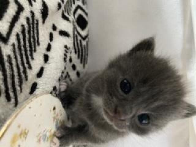 Kittens/kotki - 5/5