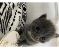 Kittens/kotki - Grafika 5/5